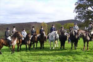 Haldon Riding Stables